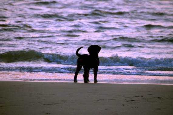 dog in front of the sea.jpg