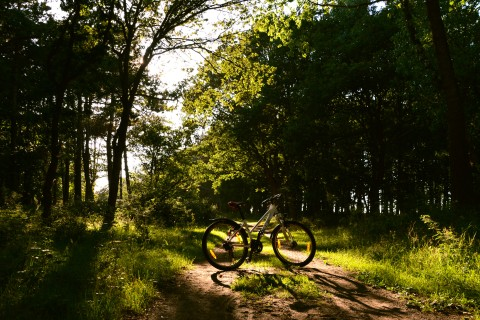 Bicycle-in-the-forest.jpg